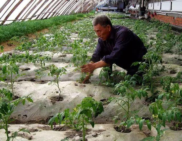 土壤有了线虫怎么办