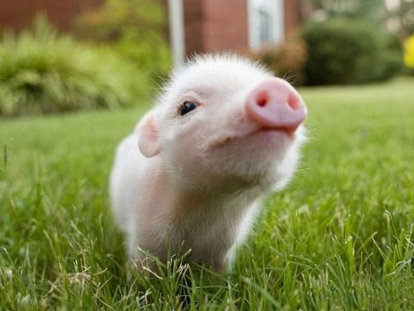几吨猪粪可以生产一吨猪粪bob登陆电脑版?