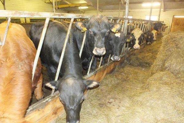 牛粪有机肥生产线